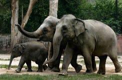 Elefanten Lizenzfreies Stockfoto