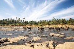 elefanten Stockbilder