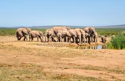 Elefanten, Addo-Elefanten Park, Südafrika Stockbild