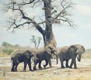 Elefanten in Afrika Stockfotos