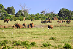 Elefanten Afrika Lizenzfreie Stockbilder