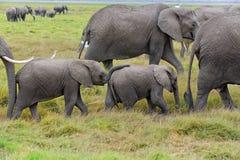 Elefanten in Amboseli NP, Kenia stockbilder