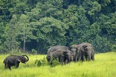 Elefanten Asien Lizenzfreie Stockfotos