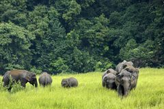 Elefanten Asien Lizenzfreies Stockfoto