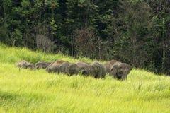 Elefanten Asien Stockbild