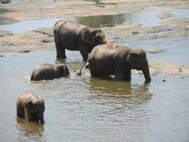Elefanten auf dem Fluss Lizenzfreies Stockbild