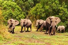 Elefanten auf Masai Mara lizenzfreies stockbild