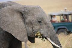 Elefanten aufgepasst an vom Jeep Stockfoto