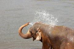 Elefanten baden Lizenzfreie Stockfotografie