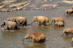 Elefanten baden Lizenzfreies Stockfoto