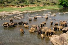 Elefanten baden Lizenzfreie Stockfotos