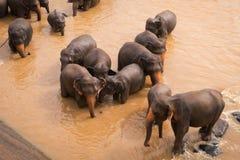 Elefanten baden im Fluss lizenzfreie stockfotos