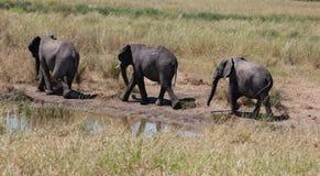 Elefanten behandla som ett barn Arkivbilder