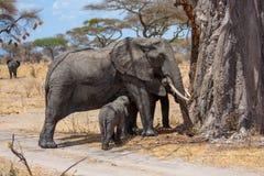 Elefanten behandla som ett barn och dess moder Arkivbild
