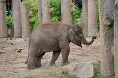 Elefanten behandla som ett barn p? zoo royaltyfri bild