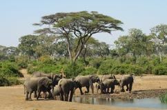 Elefanten bei Waterhole Lizenzfreie Stockbilder