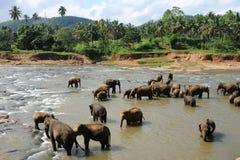 Elefanten in Ceylon lizenzfreie stockfotografie