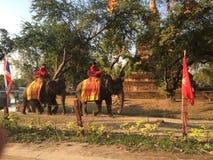 Elefanten in den Straßen von Ayutthaya Stockbilder