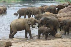 Elefanten an der Bewässerung Lizenzfreie Stockfotografie