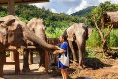 Elefanten der Mädchenliebkosung drei am Schongebiet in Chiang Mai Thailand lizenzfreie stockfotos