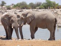 Elefanten an der Oase lizenzfreies stockbild
