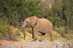 Elefanten in der Skeleton Küsten-Wüste lizenzfreie stockfotografie
