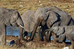 Elefanten, die an einem waterhole trinken stockbild