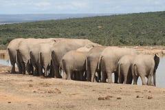 Elefanten, die heraus hängen. Lizenzfreie Stockfotografie