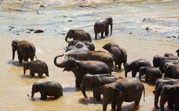 Elefanten, die im Fluss baden Lizenzfreies Stockfoto