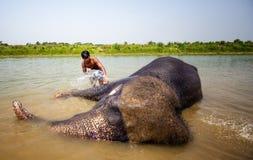 Elefanten, die im Fluss sich waschen Lizenzfreies Stockfoto