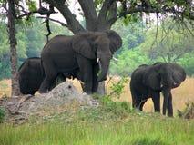 Elefanten, die Schutz unter Baum suchen stockfotos