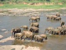 Elefanten an einem waterhole Lizenzfreies Stockfoto