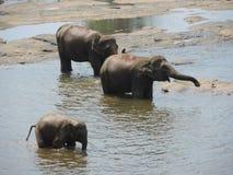 Elefanten an einem waterhole Stockbild