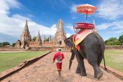 Elefanten för turister och att gå för mahout turnerar på den forntida citen royaltyfria bilder