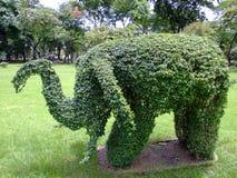 Elefanten formade busken. Royaltyfri Fotografi