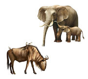 Elefantfamilj: fostra och behandla som ett barn. behandla som ett barn. Wildebeest med fåglar på dess baksida. Royaltyfri Bild