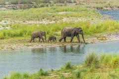 Elefanten fostrar och behandla som ett barn Royaltyfri Fotografi