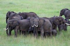 Elefanten fotografiert von der Luft Stockfotografie