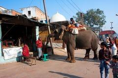 Elefanten frågar mat på den gammala stadsgatan Fotografering för Bildbyråer