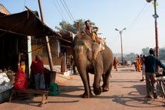 Den indiska elefanten går på den gammala stadsgatan Arkivfoton