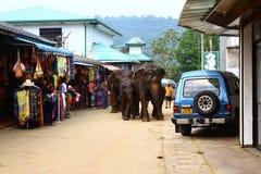 Elefanten gehen mit dem Baden Lizenzfreies Stockbild