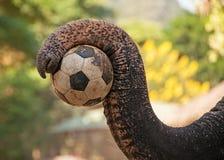 Elefantfotboll Royaltyfri Bild