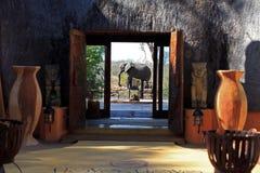 Elefanten i läger Royaltyfri Bild