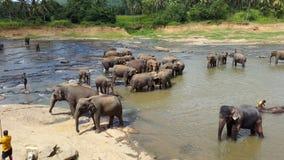 Elefanten im Fluss Stockfoto