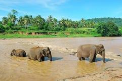 Elefanten im Fluss Stockfotos