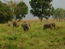 Elefanten im Jim Corbett-Staatsangehörigpark-cc$ii Stockbild