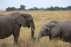 Elefanten im langen Gras Lizenzfreies Stockfoto