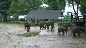 Elefanten im Nationalpark Udawalawe stock video