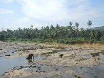 Elefanten kamen zu baden Lizenzfreie Stockfotografie