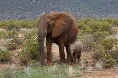 Elefanten med dess behandla som ett barn i Afrika Royaltyfri Foto